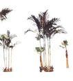 棕榈及椰树0012,棕榈及椰树,植物,