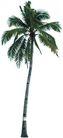 棕榈及椰树0014,棕榈及椰树,植物,