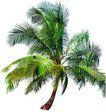 棕榈及椰树0016,棕榈及椰树,植物,