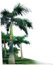 棕榈及椰树0017,棕榈及椰树,植物,
