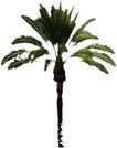 棕榈及椰树0018,棕榈及椰树,植物,