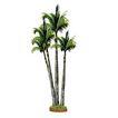 棕榈及椰树0020,棕榈及椰树,植物,