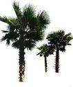 棕榈及椰树0022,棕榈及椰树,植物,