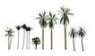 棕榈及椰树0023,棕榈及椰树,植物,