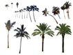 棕榈及椰树0030,棕榈及椰树,植物,