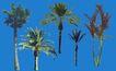 棕榈及椰树0037,棕榈及椰树,植物,