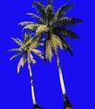棕榈及椰树0038,棕榈及椰树,植物,