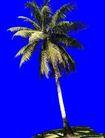 棕榈及椰树0042,棕榈及椰树,植物,