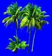 棕榈及椰树0043,棕榈及椰树,植物,