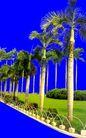 棕榈及椰树0047,棕榈及椰树,植物,