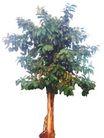 树木1046,树木,植物,