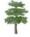 树木1050,树木,植物,