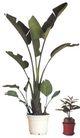 树木1052,树木,植物,