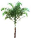 树木1055,树木,植物,