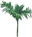 树木1068,树木,植物,