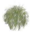 树木1070,树木,植物,