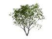 树木1075,树木,植物,