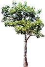 树木1085,树木,植物,
