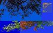 树木1086,树木,植物,