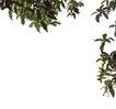 树木1090,树木,植物,
