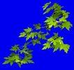 树木1095,树木,植物,