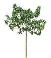 四季阔叶树0220,四季阔叶树,植物,