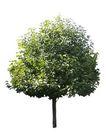 四季阔叶树0221,四季阔叶树,植物,