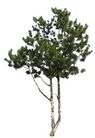 四季阔叶树0222,四季阔叶树,植物,