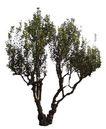 四季阔叶树0223,四季阔叶树,植物,