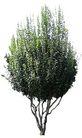四季阔叶树0224,四季阔叶树,植物,