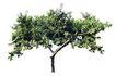 四季阔叶树0229,四季阔叶树,植物,