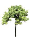 四季阔叶树0230,四季阔叶树,植物,
