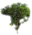 四季阔叶树0232,四季阔叶树,植物,