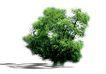 四季阔叶树0233,四季阔叶树,植物,