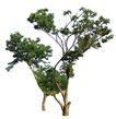 四季阔叶树0235,四季阔叶树,植物,