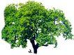 四季阔叶树0237,四季阔叶树,植物,