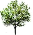 四季阔叶树0238,四季阔叶树,植物,
