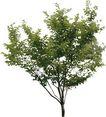 四季阔叶树0243,四季阔叶树,植物,