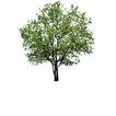 四季阔叶树0245,四季阔叶树,植物,