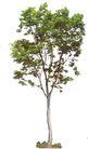 四季阔叶树0246,四季阔叶树,植物,