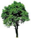 四季阔叶树0247,四季阔叶树,植物,