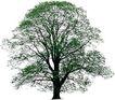四季阔叶树0248,四季阔叶树,植物,