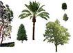 四季阔叶树0249,四季阔叶树,植物,