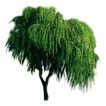 四季阔叶树0255,四季阔叶树,植物,