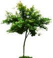 四季阔叶树0256,四季阔叶树,植物,