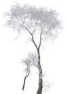 四季阔叶树0257,四季阔叶树,植物,