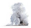四季阔叶树0258,四季阔叶树,植物,