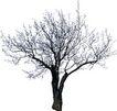四季阔叶树0260,四季阔叶树,植物,