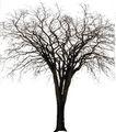 四季阔叶树0262,四季阔叶树,植物,