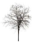 四季阔叶树0263,四季阔叶树,植物,